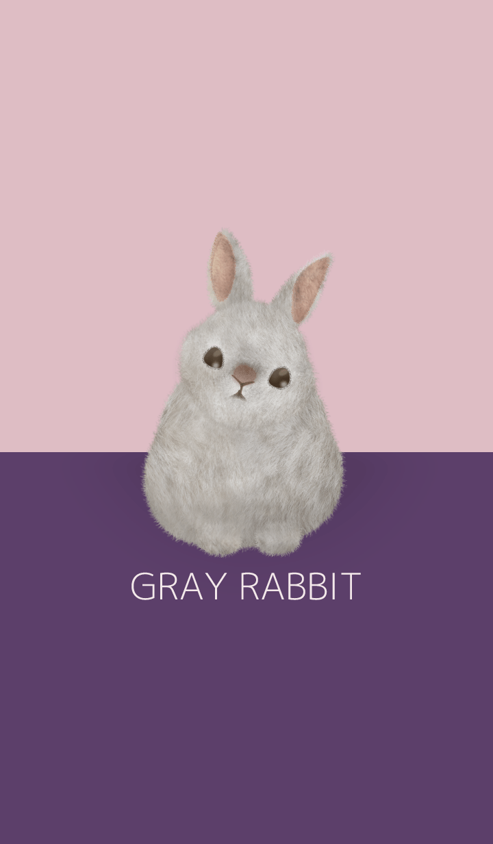 GRAY RABBIT/purple 18