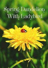 Spring Dandelion With Ladybird
