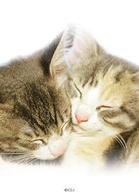 cats in a dream