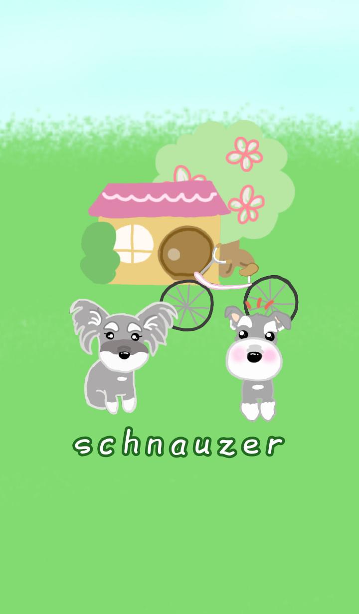 schnauzer dressed gently