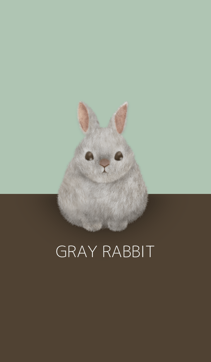 GRAY RABBIT/Brown 18