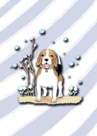 Aomyim beagle
