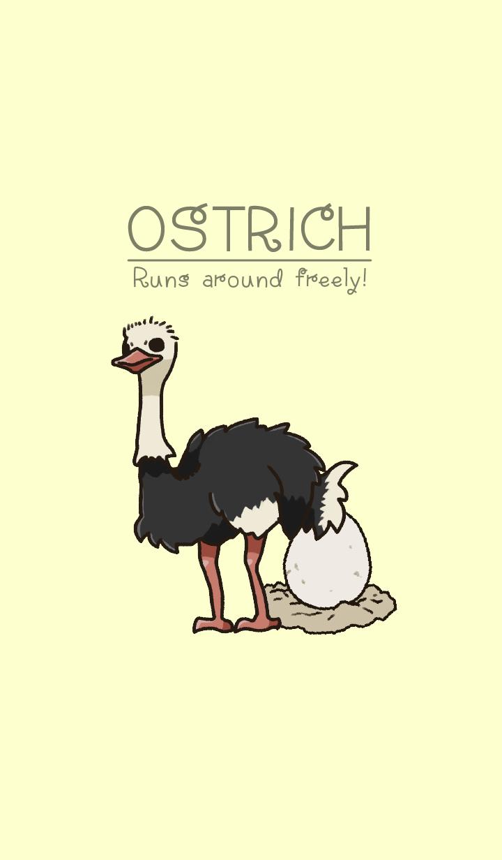 Ostrich run! JP