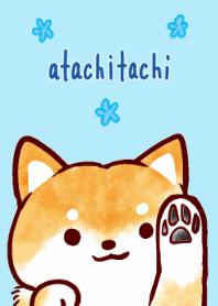 ธีมไลน์ atachitachi no shibainu Theme Summer