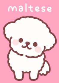 ธีมไลน์ Fluffy Maltese Puppy