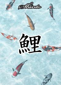 ธีมไลน์ Shinto Japanese style carp
