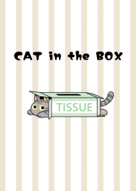 ธีมไลน์ CAT in the BOX[American Short hair]